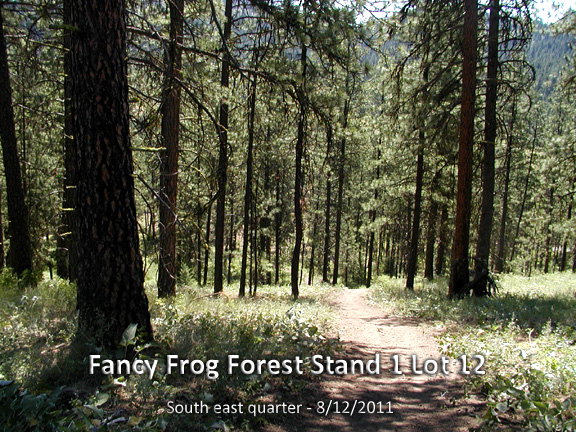 fancy frog forest